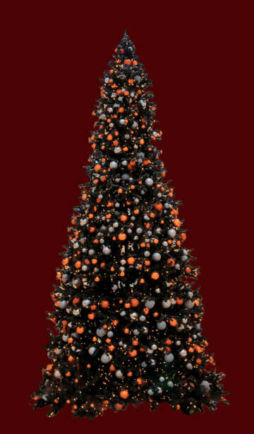 Christmas tree isolated №40741