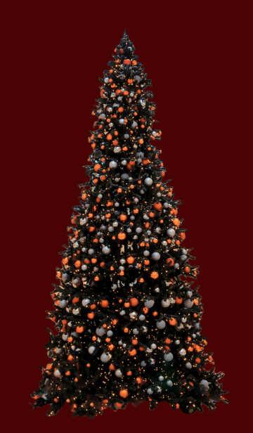 Weihnachtsbaum, isoliert №40741