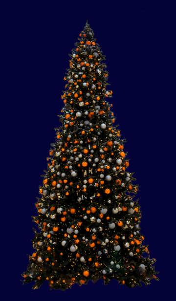 Christmas tree isolated №40740