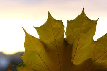 Autumn leaf №40883