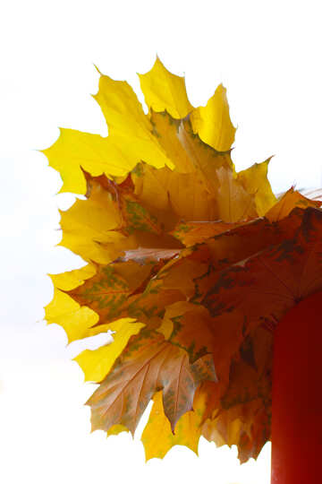 Autumn leaves bouquet №40879