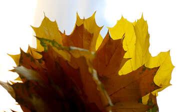 Foglie di autunno mazzo isolato №40875