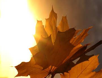 Autumn leaves №40861