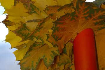 Autumn leaves №40884