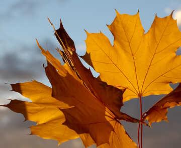 Autumn leaves №40889