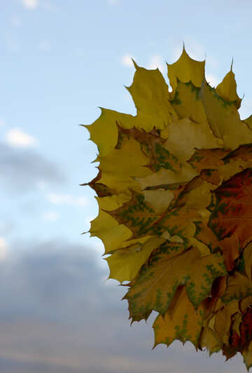 Autumn sky leaves №40885
