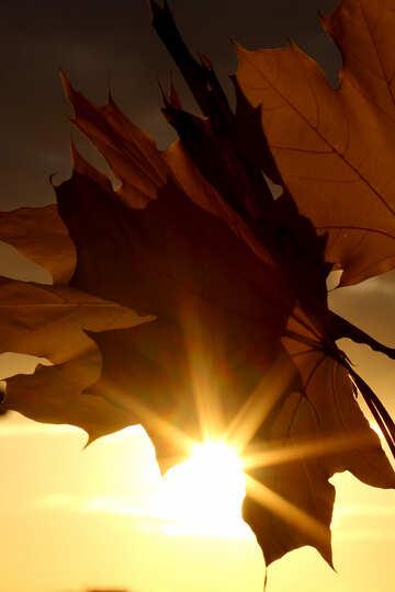 Beautiful autumn picture №40891