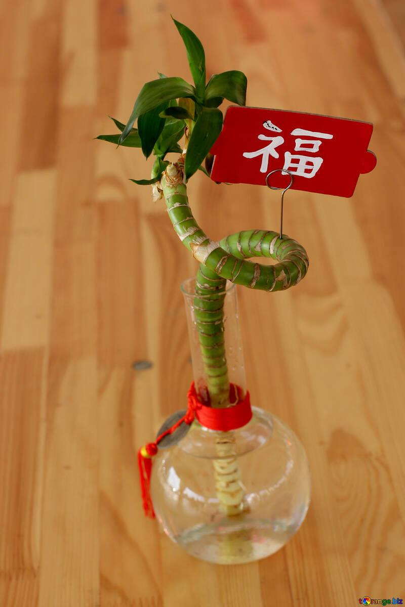 Bambus Innen Chinesischer Bambus Auf Schreibtisch Innenarchitektur