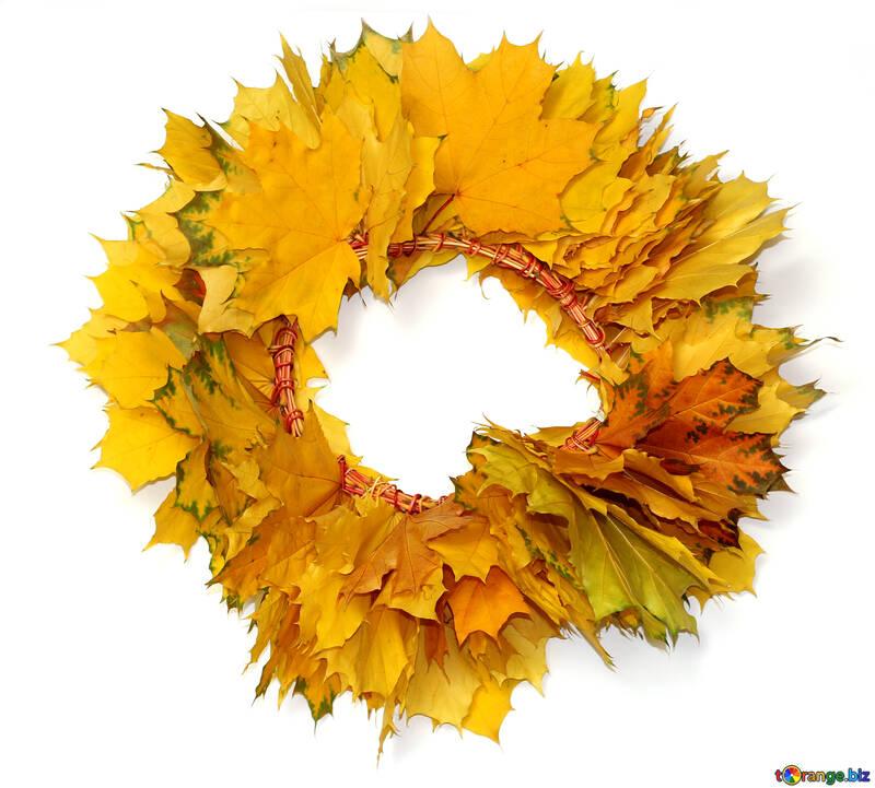 Autumn wreath isolated №40863