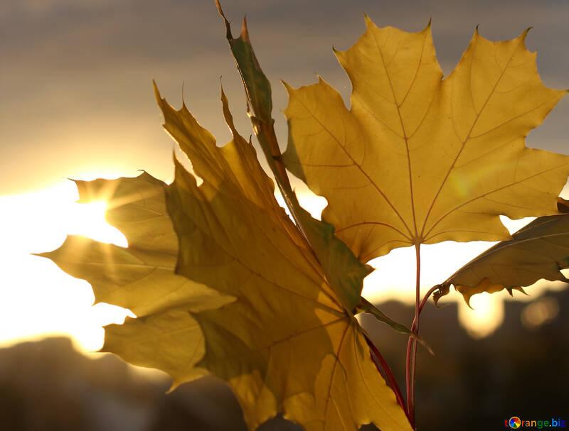 Autumn leaves №40887