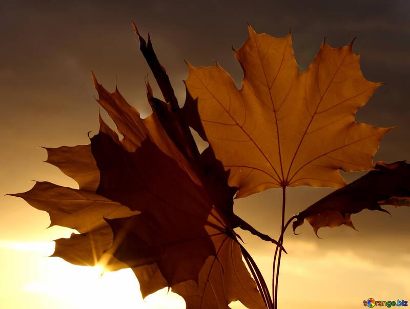 Autumn background №40890