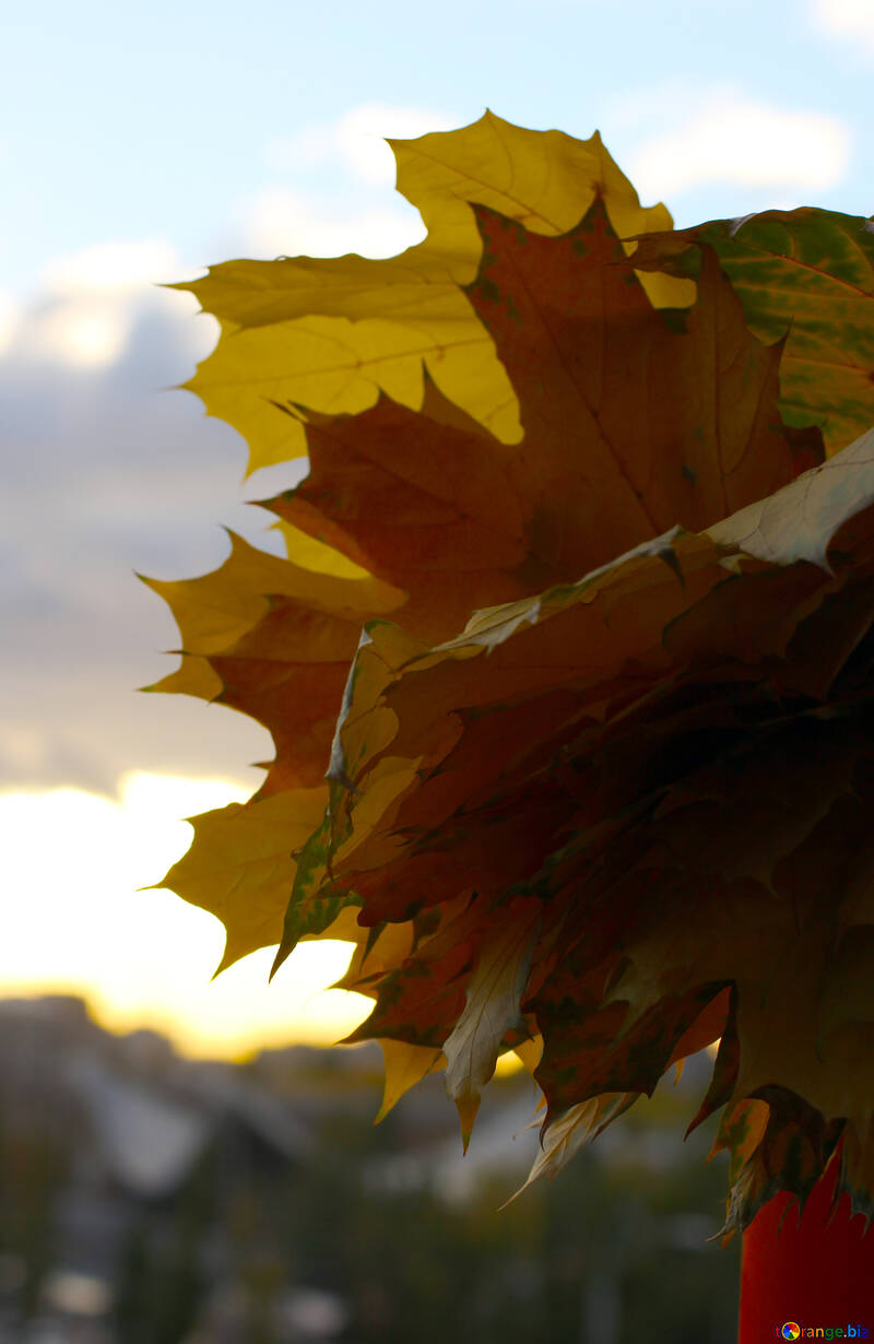 Autumn in the city №40874