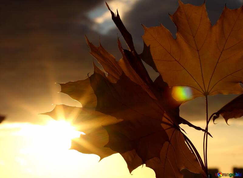 Autumn leaves sunset №40888
