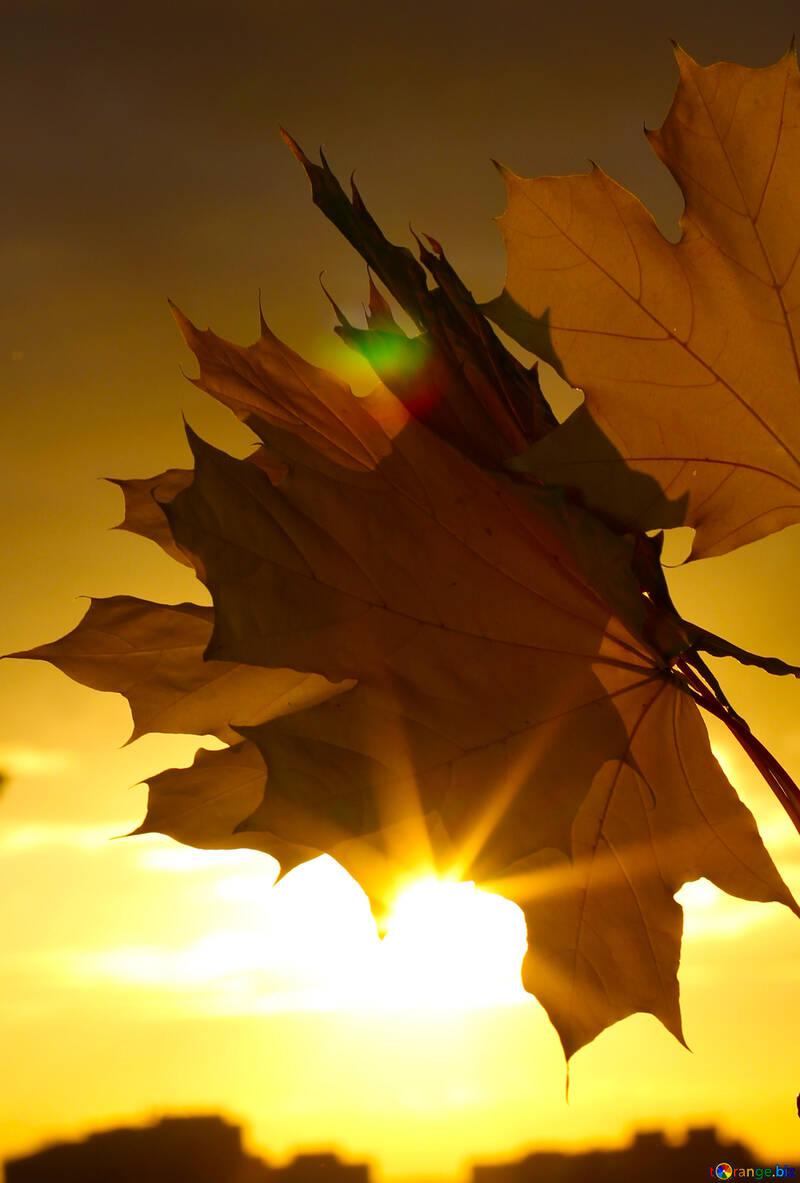 Autumn sunset background №40893