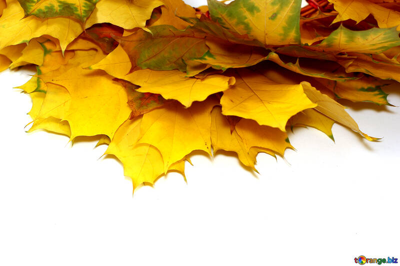 Isolated autumn leaves frame №40873