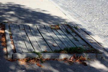 Abbattimento di alberi di città №41811