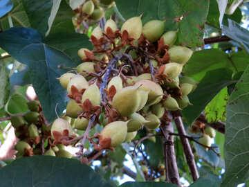 Tree nut №41112