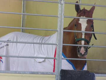 Cavallo nella gabbia №41334