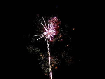 Fireworks night flower №41355