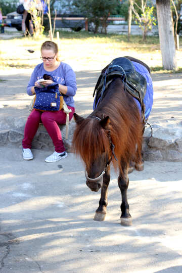 Pony in esecuzione in città №41761