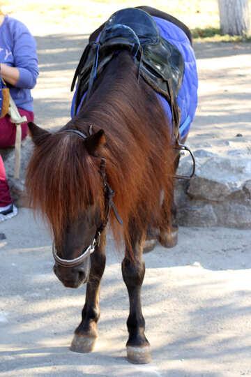 Triste pony №41760