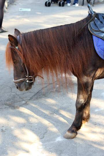 Pony in città №41759