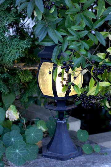 Street lamp in the garden №41738