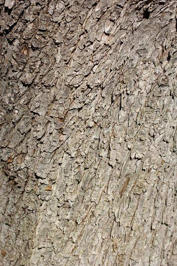 The texture of tree bark №42000