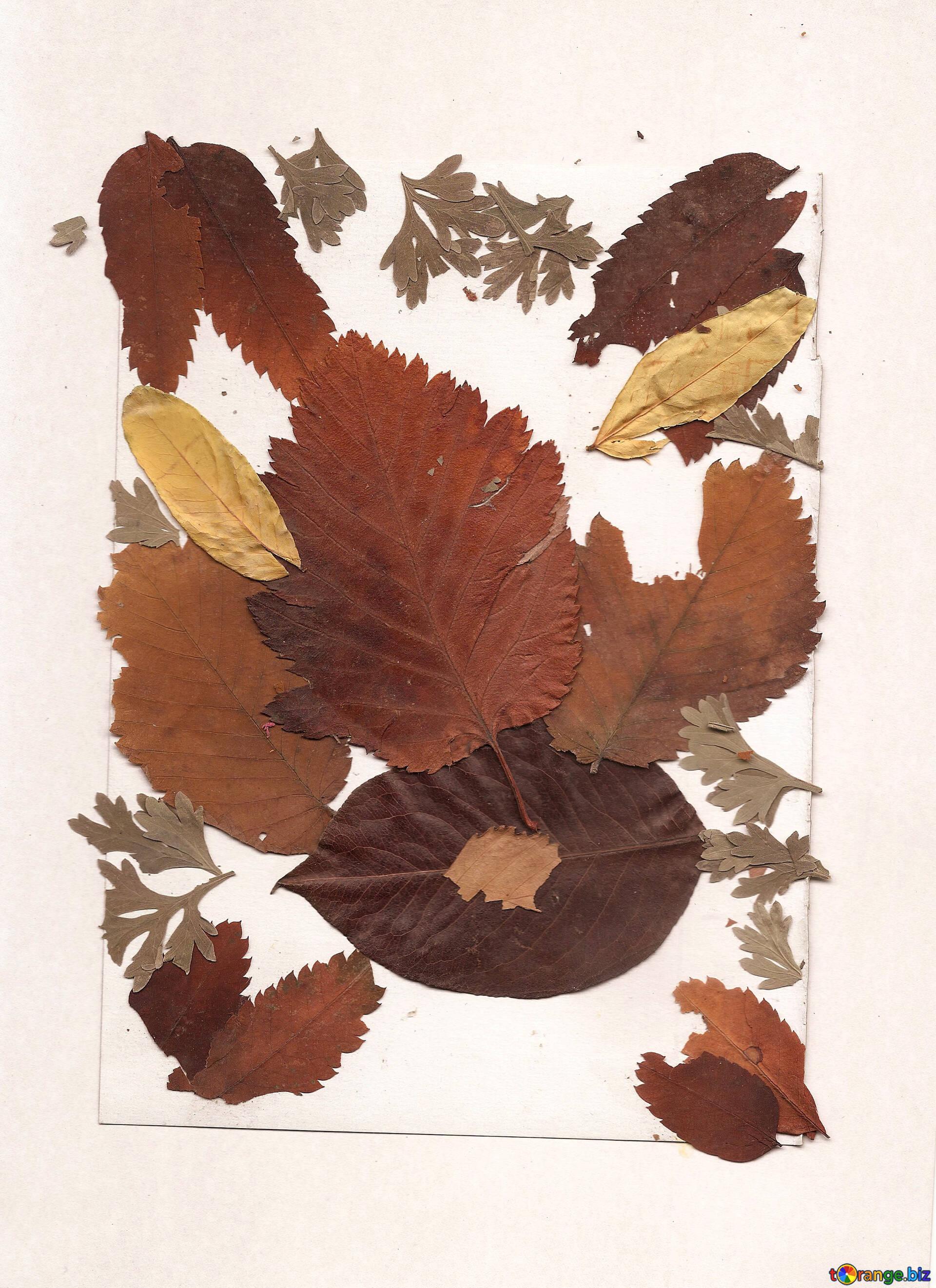 Картинки с засушенными листьями, отрекаются