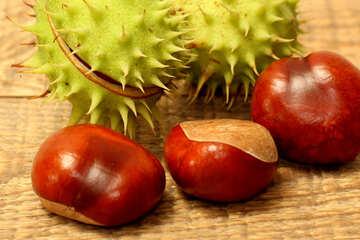Chestnut fruit №42484