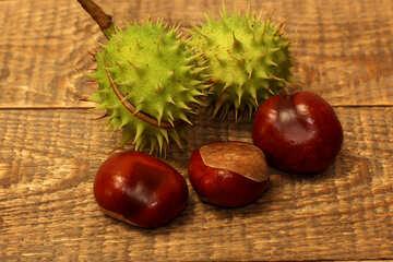 Autumn fruits Chestnut №42485