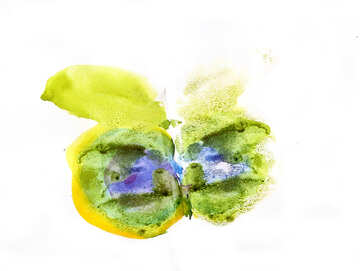 Butterfly №42686