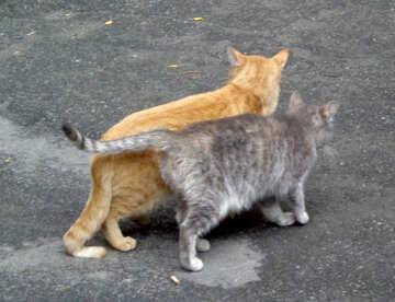 Cat couple №42996