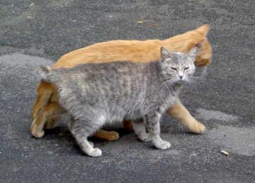 Cat family №42995