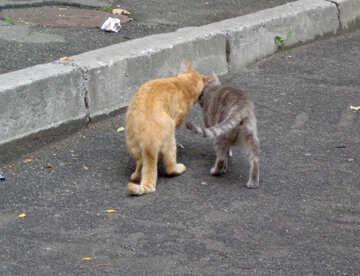 Cat spring №42998