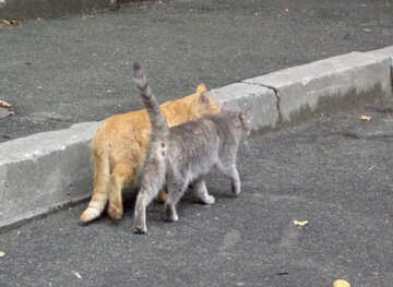 Cat`s love №42999