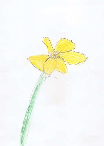 Children`s drawing a flower daffodil №42752