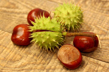 Spiny conker №42471