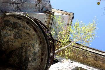 Tree on the ruined balcony №42145