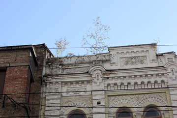 Trees grow on the facade of an abandoned house №42095