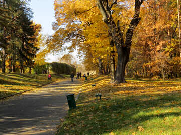 Alley in autunno parco №42216