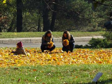 Wreaths of autumn leaves №42219