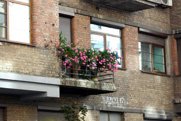 Old balcony with flowers №42089