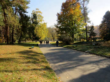 Autumn garden №42213