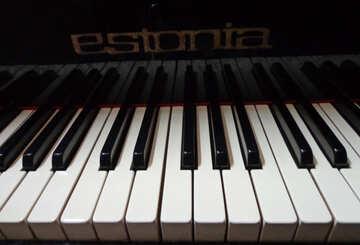 Piano keys №42955