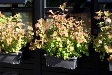 Decorative plants on the windows №42176