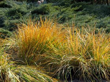Grass in der Landschaftsgestaltung №42267
