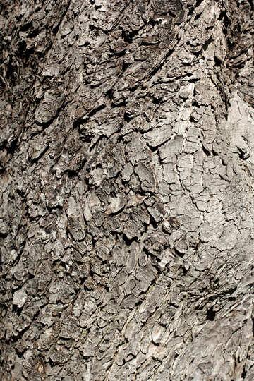 Bark of tree №42001