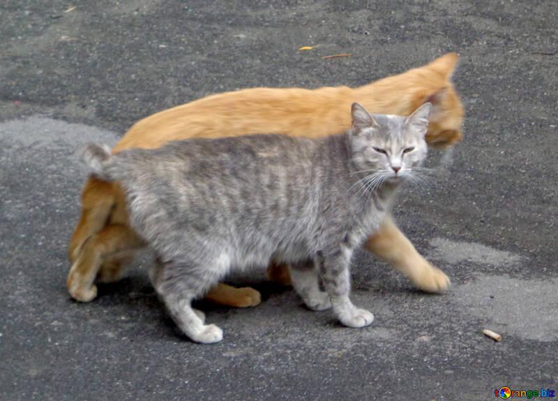 Famille Cat №42995