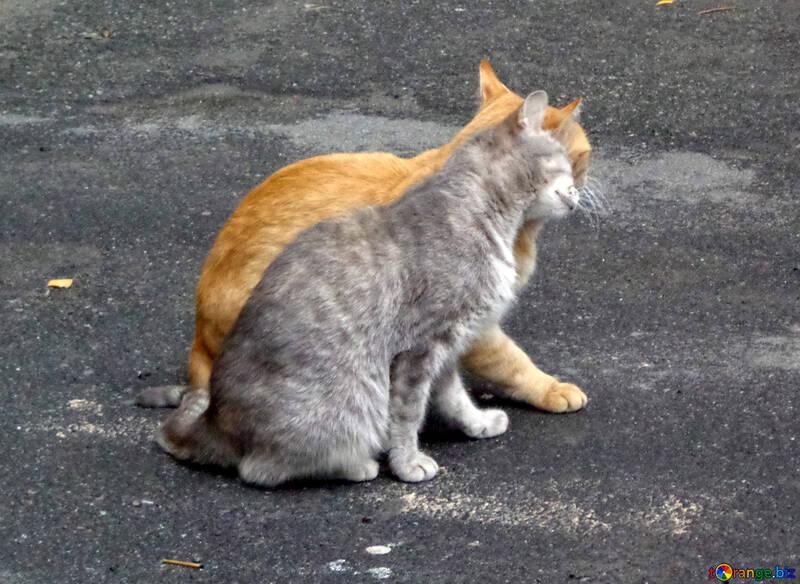 Cat tendresse №42994